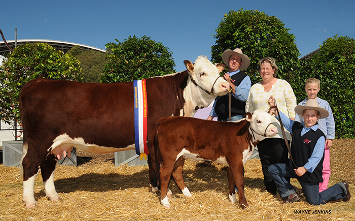 Sydney Royal Show 2012 Grand Champion Hereford Female