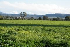 Truro landscape 2
