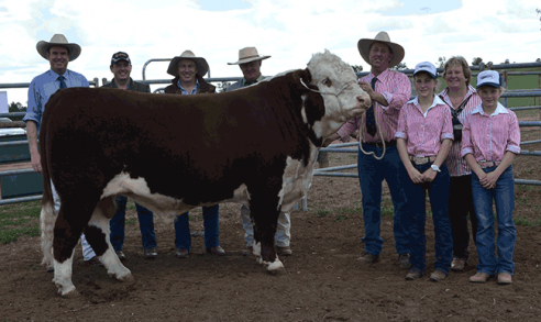 MOST SUCCESSFUL TRURO BULL SALE YET !
