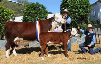 Elite females on offer at Truro Whiteface production sale