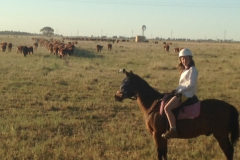 2014 Tilly with cattle on road